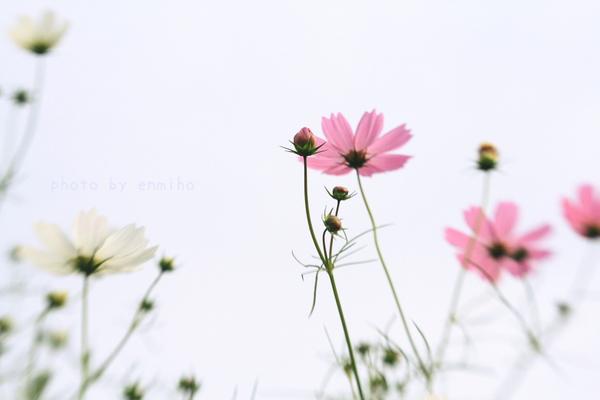 IMG_5684のコピー.jpg